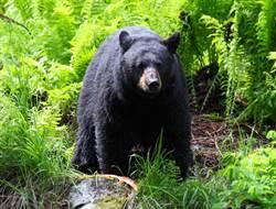 後院澆花驚見巨熊闖入 下秒反差舉動超驚喜