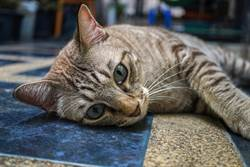 阿公買窩沒看清尺寸 收迷你實品貓孫超困惑:傻眼貓咪