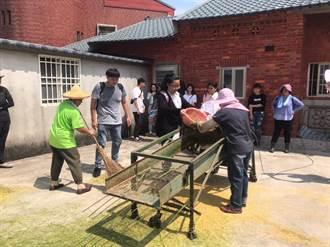 一日農夫體驗  百人農村體驗割稻趣