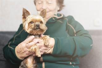 奶奶截肢坐輪椅 暖心小狗幫除障礙感動網:超懂事