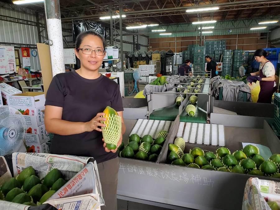 中埔鄉何秋圓建立生產至運銷的一套標準生產流程,讓消費者吃到有品質保障的木瓜。(嘉義縣政府提供/張毓翎嘉義傳真)