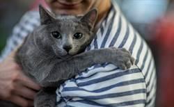 2男夜闖寵物店偷貓 深吸一大口老闆驚呆:沒洗過澡