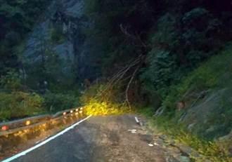 南橫公路179.2K路樹倒蹋 交通中斷