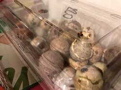 廚房有怪聲?忘了吃的蛋盒孵出20隻小鵪鶉