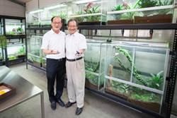清大成立蛙房復育台灣原生蛙