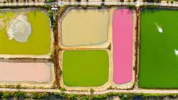 金門粉紅湖美景 熱門打卡新景點