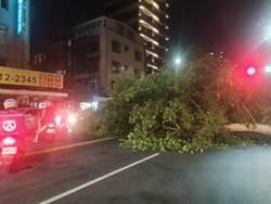 驚!台北市路樹倒塌  砸中路邊汽車
