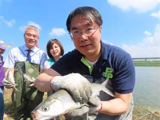 虱目魚季現撈尚鮮 台南市長黃偉哲下海行銷