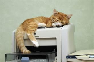 橘貓霸佔影印機印出高清肉球照 網見亮點笑歪:是男孩子