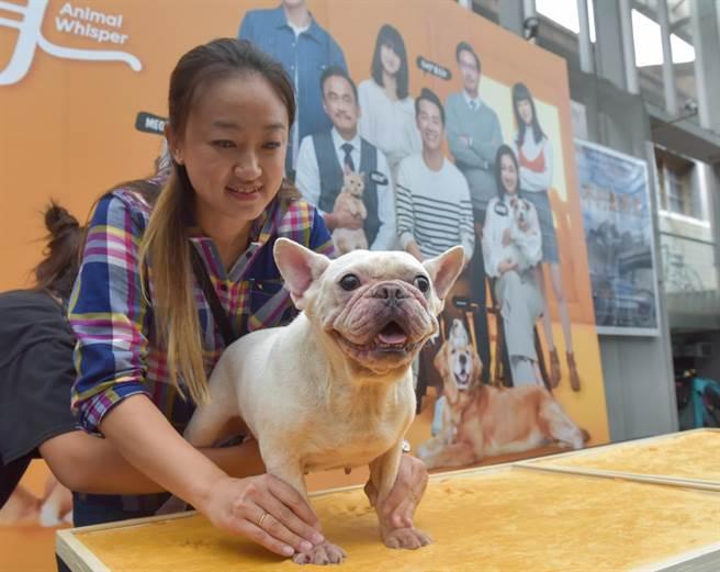 《黑喵知情》首映会,宠物指导师Kiki在旁协助。(卢祎祺摄)