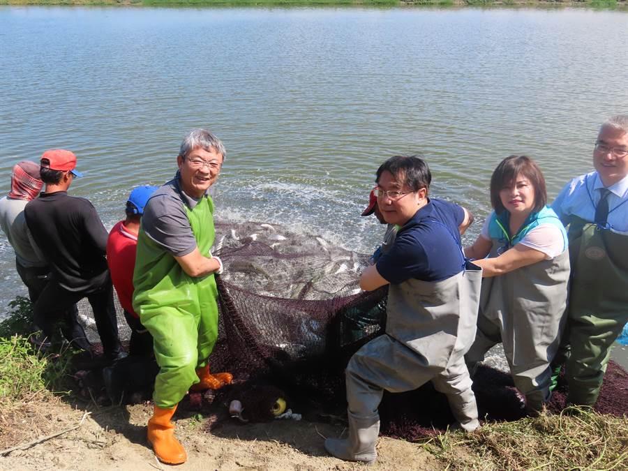 台南市長黃偉哲到學甲魚塭體驗虱目魚捕撈過程。(莊曜聰攝)
