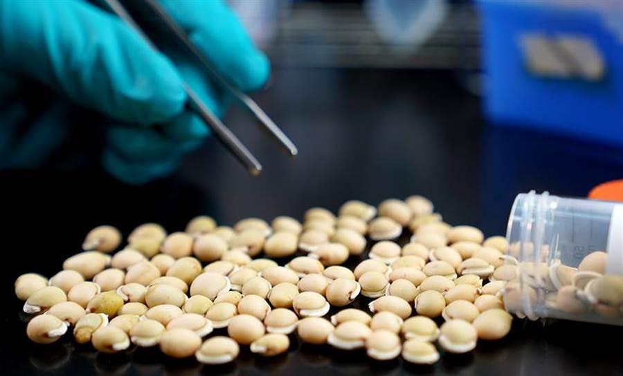 中研院團隊研究《本草綱目》當中記載的白扁豆,找到抑制新冠肺炎流行的防疫機制。(中研院提供/李侑珊台北傳真)