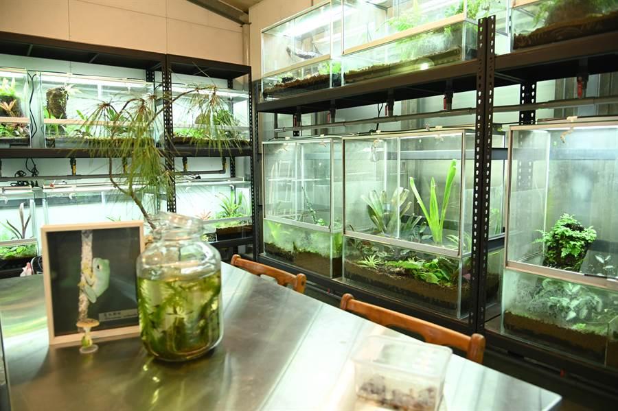 清華大學第1期蛙房落成,保育多種台灣原生種青蛙。(清大提供/陳育賢新竹傳真)