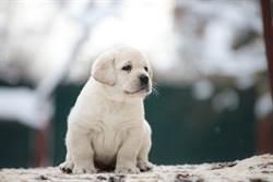 主人溫柔叫喚 狗寶寶竟學會用奶音「講人話」
