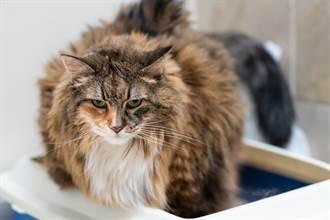 貓皇示範貓砂盆用法「全世界的貓都用錯了!」主人一看崩潰