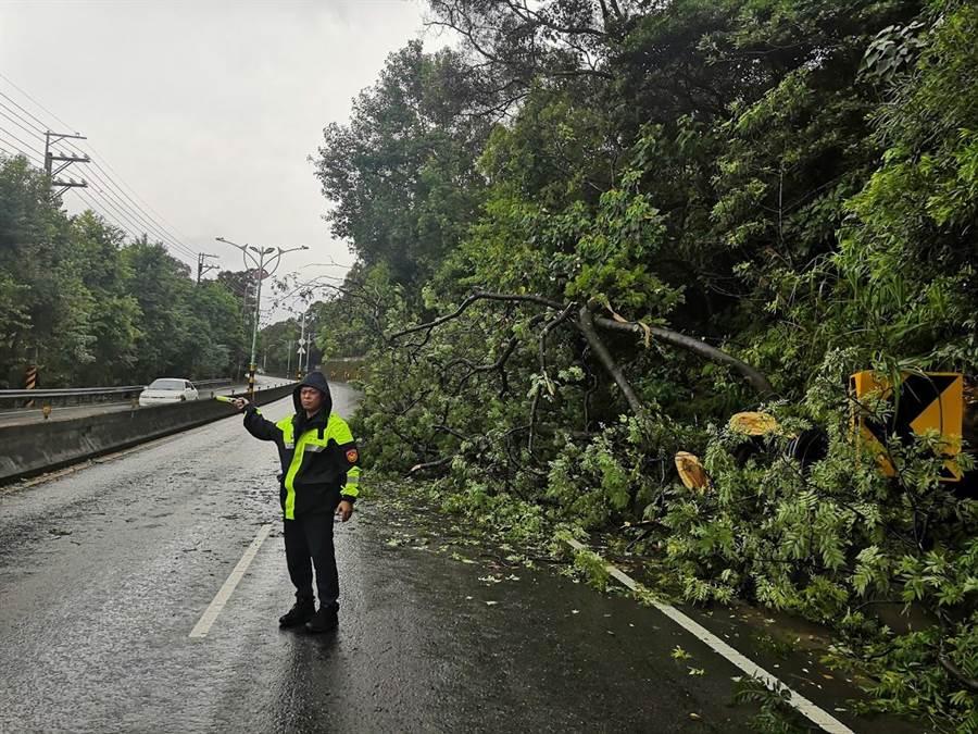 強降雨造成路樹倒塌,龍潭警立即前往救災。(龍潭警分局提供/黃婉婷桃園傳真)