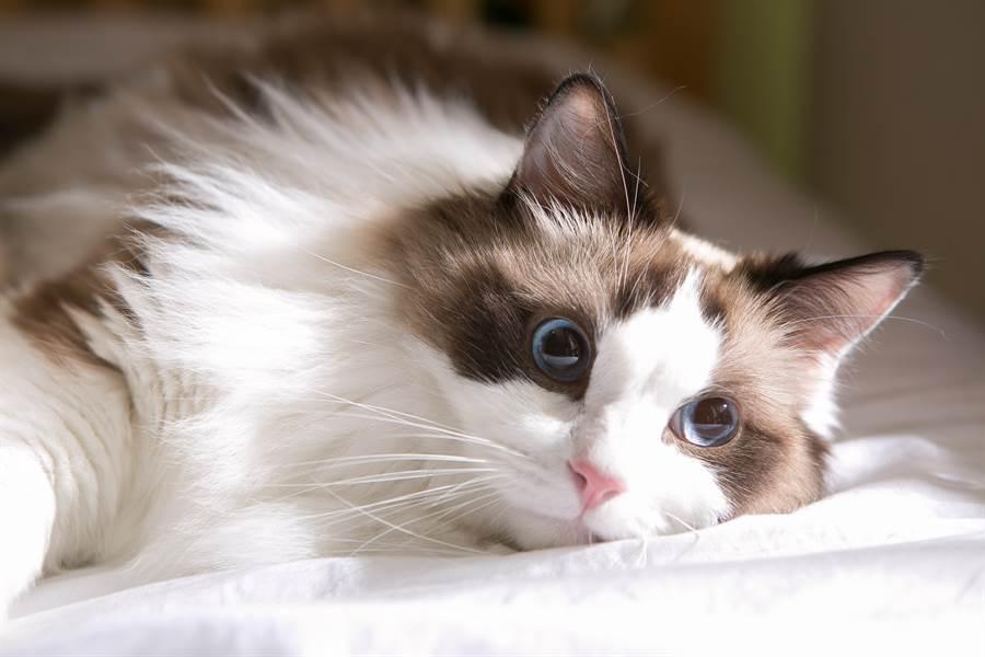 貓咪經常來探病,讓貝克感到非常溫暖(示意圖/達志影像)