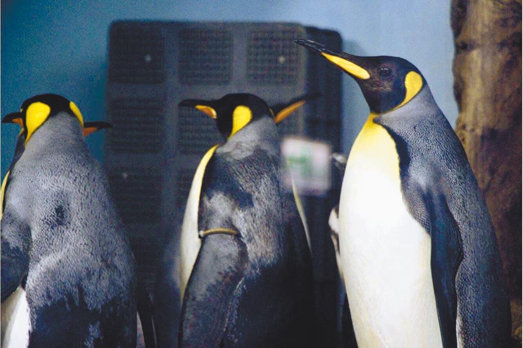 Xpark館的第9展區主角是企鵝,在地下的Xcafe by PRONTO能看到企鵝的通道。(Xpark提供)