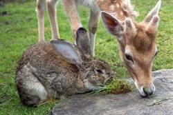 野生鹿兔黏踢踢 迪士尼《小鹿斑比》真實上演