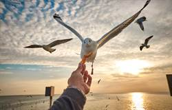 海鷗「被箭刺穿胸口」還到速食店嗑炸雞 網驚:不死鳥