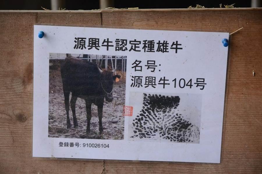 每頭牛都有身分證名,牛棚管理嚴謹。(資料照片/王志偉攝)