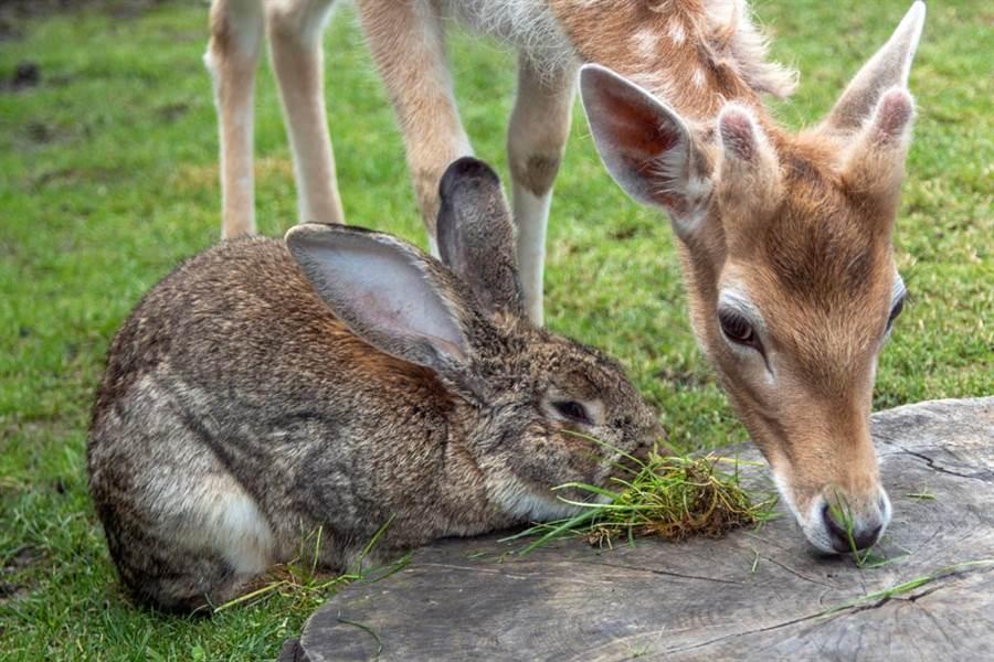 野生鹿兔黏踢踢 迪士尼《小鹿斑比》真實上演(示意圖/達志影像)