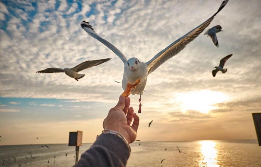海鷗「被箭刺穿胸口」還到速食店嗑炸雞 網驚:不死鳥(示意圖/達志影像)