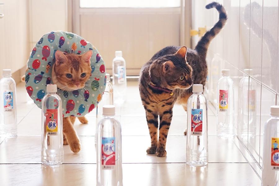 喵林匹克運動會熱烈開跑!邀請網友們曬愛貓照贏好禮。圖/業者提供