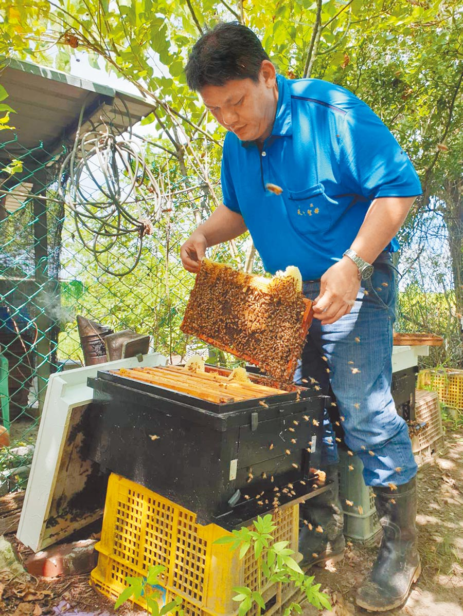 台南市楠西養蜂產銷班第三班班長蔡勝峰從廚師轉行養蜂有成,獲今年全國蜂蜜評鑑特等獎。(蔡勝峰提供/劉秀芬台南傳真)