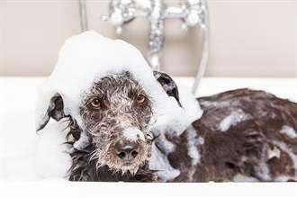 牧羊犬討厭屁股濕被逼洗澡 超狂倒立浴缸裡眼神死