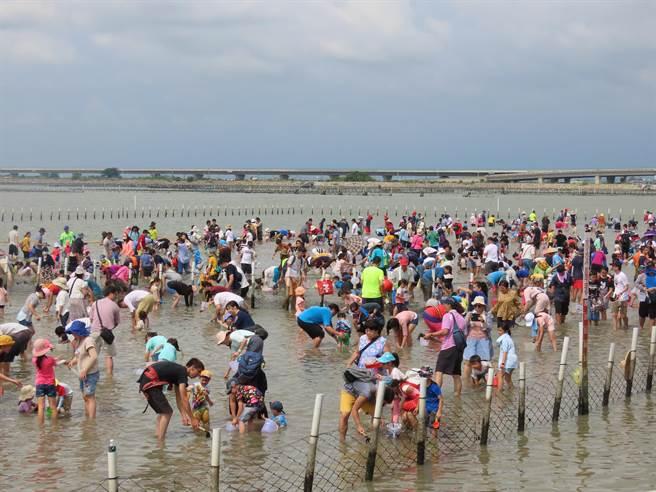 2020台南七股海鮮節開跑,天氣炎熱加上報復性出遊潮,1日下午登場的招牌活動「摸文蛤體驗」吸引爆滿人潮,現場近5000民眾湧入,車輛大排長龍。(莊曜聰攝)
