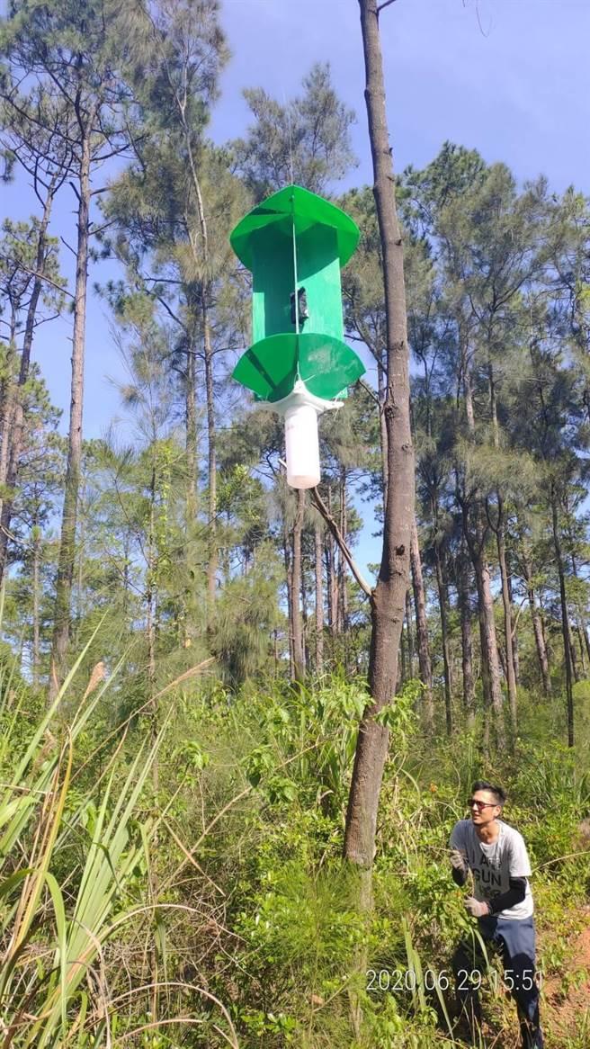 縣林務所懸掛誘捕器捕捉病媒松斑天牛。(金門縣林務所提供)
