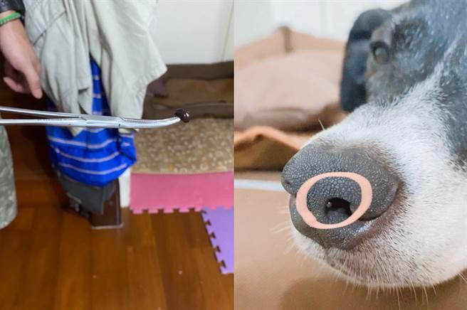狗狗爬山玩水遭水蛭入侵 主人一招救狗「叫成一團」網歪樓笑炸