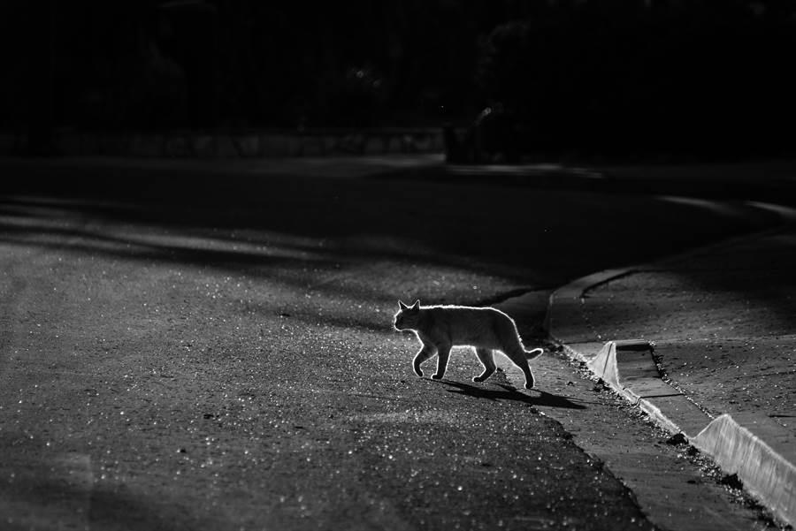 阿曼達養的貓Freddy經常半夜搞失蹤,直到她查看監視器才發現秘密(示意圖/達志影像)