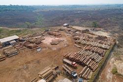 巴西雨林砍伐加速