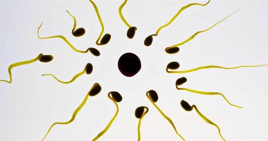 精子。(示意圖/Pixabay)