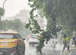 仰德大道強降雨大樹倒路中  網友讚警赤腳搬樹