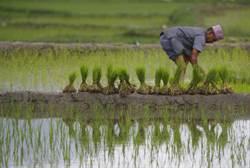 聯合國警告:產糧國限出口 疫情造成50年來最嚴重糧食危機