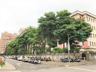 黑板樹遭強剪?中市警局:颱風前修剪避免危害人車