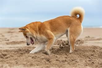 柴柴趁媽不注意狗來瘋 一進佛堂驚見「沙灘」