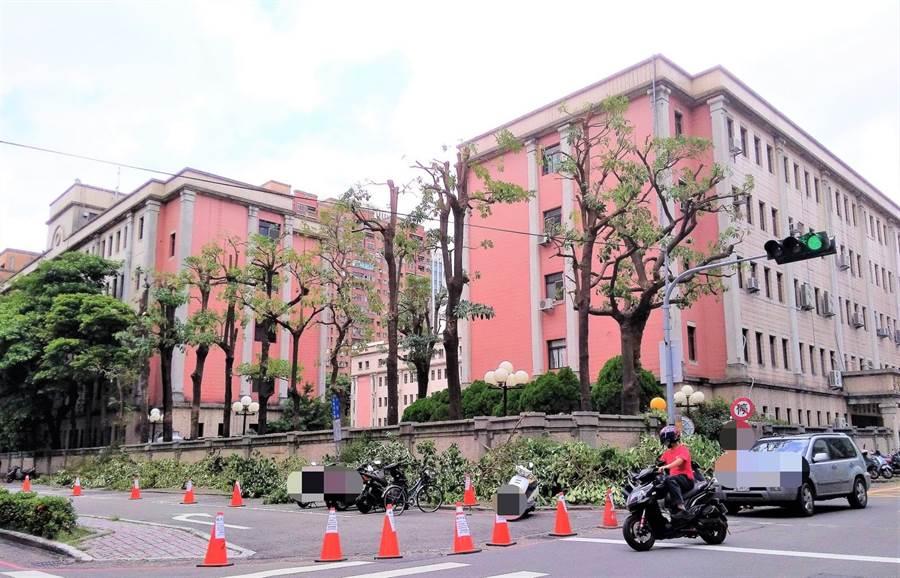 環保醫師張豐年質疑台中市西屯區文心路的行道樹遭過度強剪。(張豐年提供/盧金足台中傳真)