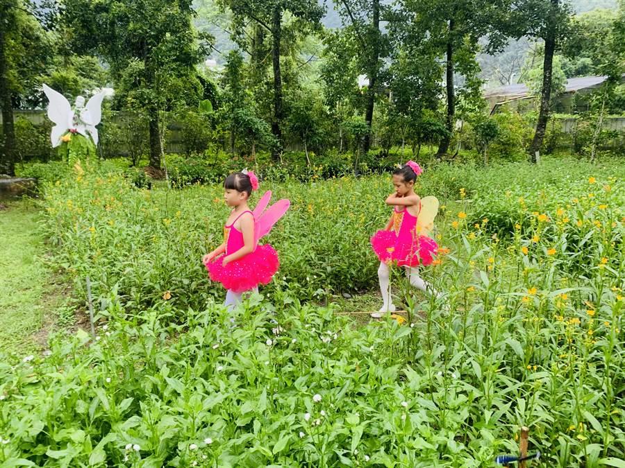 台一生態農場「蝴蝶迷宮」,適合親子同遊。(廖志晃攝)