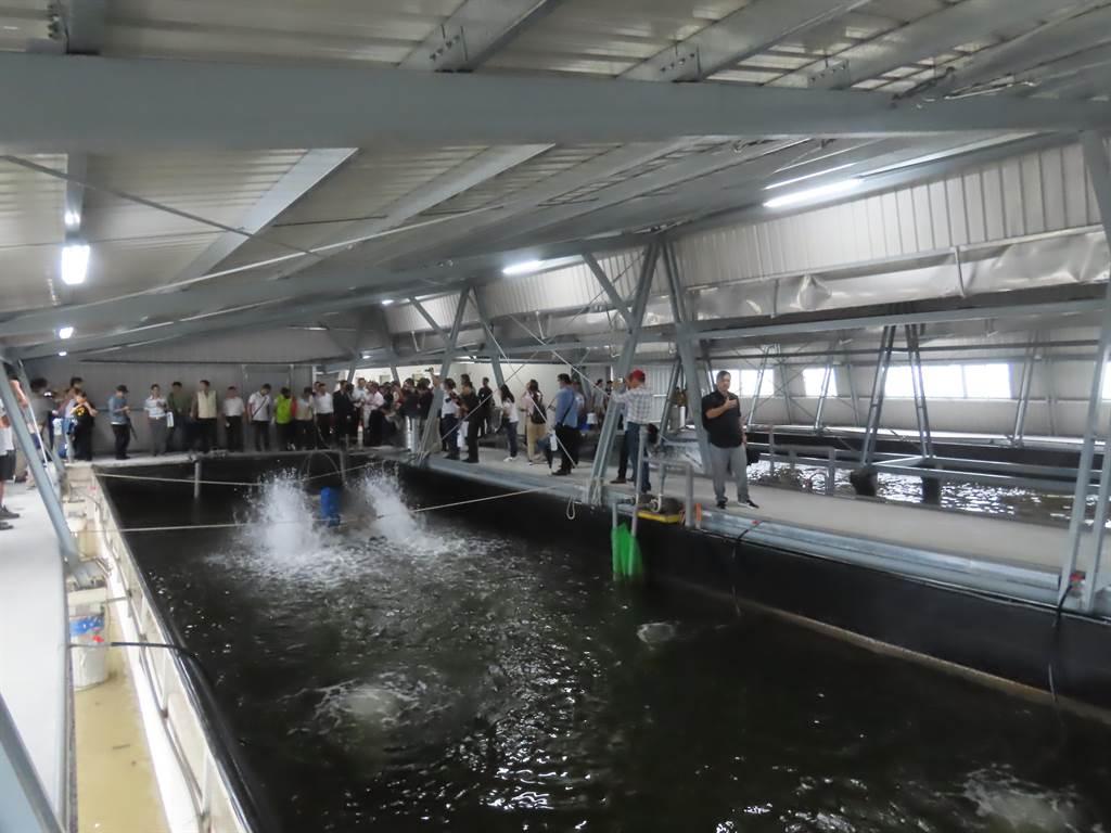 台鹽綠能與資策會合作,結合太陽能光電、AI智慧科技及大數據打造室內養殖示範基地,採用的「智慧水產雲」科技養殖系統,就如同漁民水中的數位分身。(莊曜聰攝)