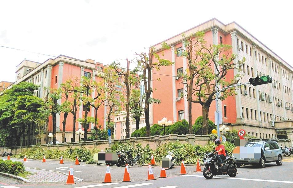 環保醫師張豐年3日質疑,台中文心路市警局舊址內的黑板樹遭過度修剪。(張豐年提供/盧金足台中傳真)
