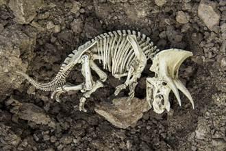研究「畸形化石」科學家意外揭露恐龍7600萬年前驚天秘密