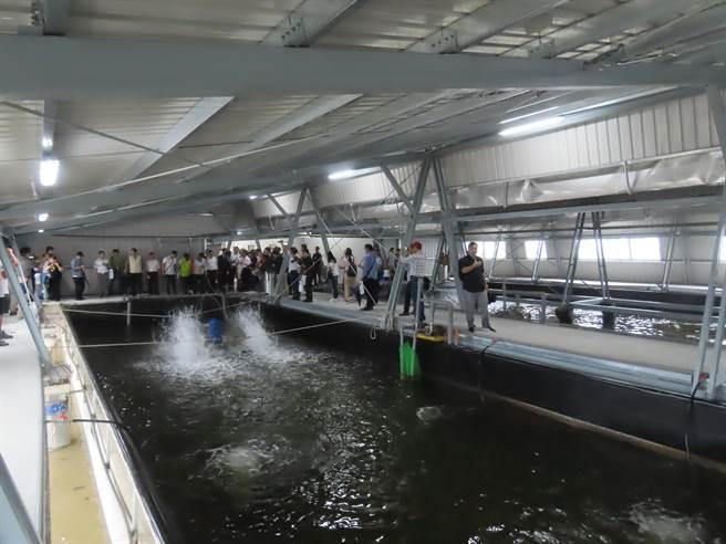 台盐绿能与资策会合作,结合太阳能光电、AI智慧科技及大数据打造室内养殖示范基地,採用的「智慧水产云」科技养殖系统,就如同渔民水中的数位分身。(庄曜聪摄)