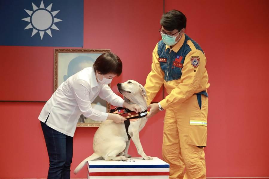 台中市長盧秀燕4日在市政會議公開授階時,「鐵雄」還回頭看到盧秀燕,好像在說「感謝市長,我是搜救犬我驕傲!」(盧金足攝)