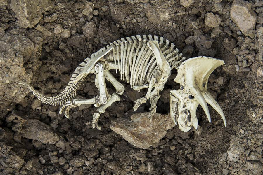 研究「畸形化石」科學家意外揭露恐龍7600萬年前驚天秘密(示意圖/達志影像)