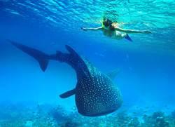 與鯨共泳超浪漫?妹子浮潛被「座頭鯨尾巴甩中」GG了