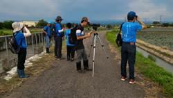 台南水雉夏季鳥口普查 較去年喜增117隻